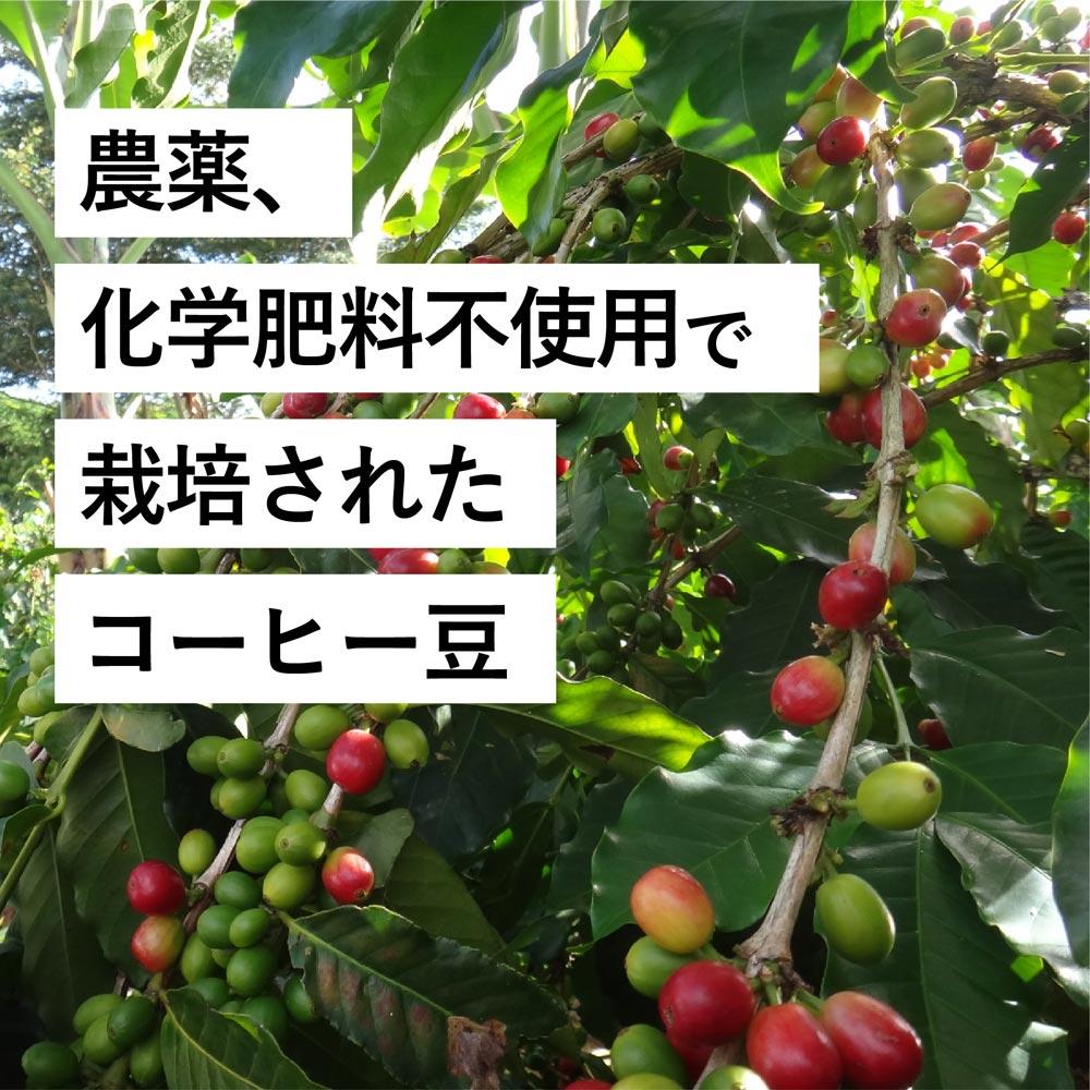 農薬・化学肥料不使用で栽培されたコーヒー豆