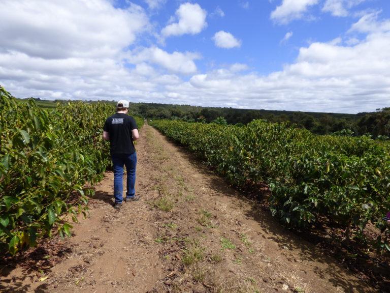 ブラジル プリマベーラ農園