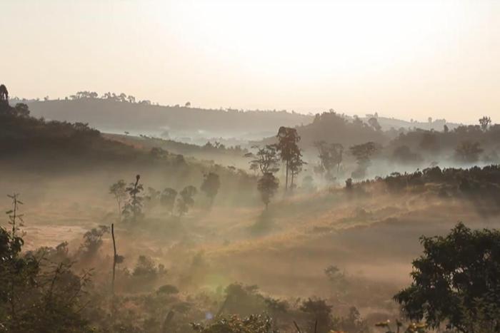 エチオピア ゲシャビレッジ