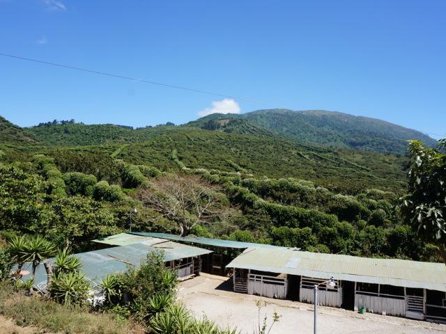 エルサルバドル サンタ・リタ農園