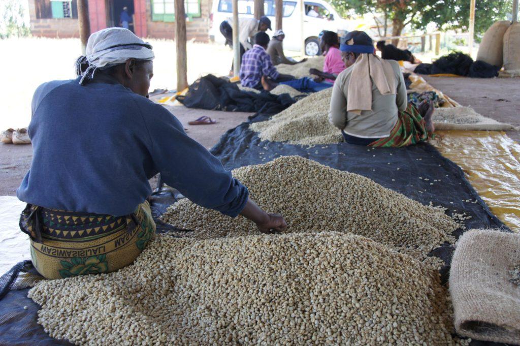 [コーヒー豆]ケニア ABC