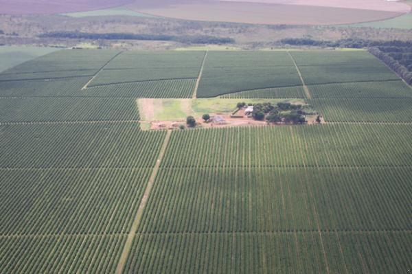ブラジル ロンドリーナ農園