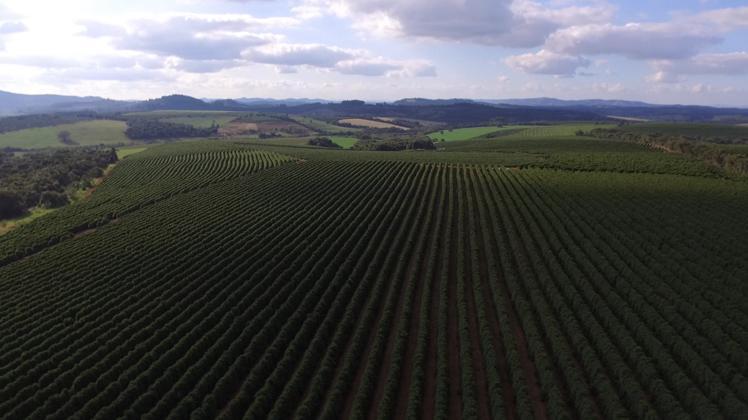 ブラジル ベラビスタ農園