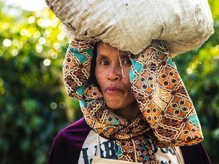 インドネシア ワハナ ロングベリー